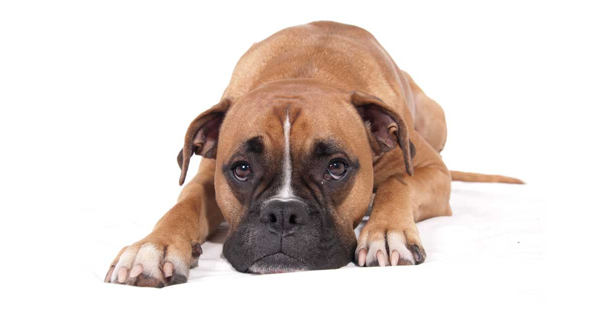 In the Event of a Divorce, Who Gets the Dog?