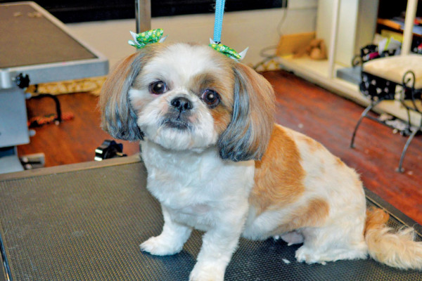 Bark of the Town Pet Salon & Spa Where a Dog Day Afternoon is a Very Good Thing!