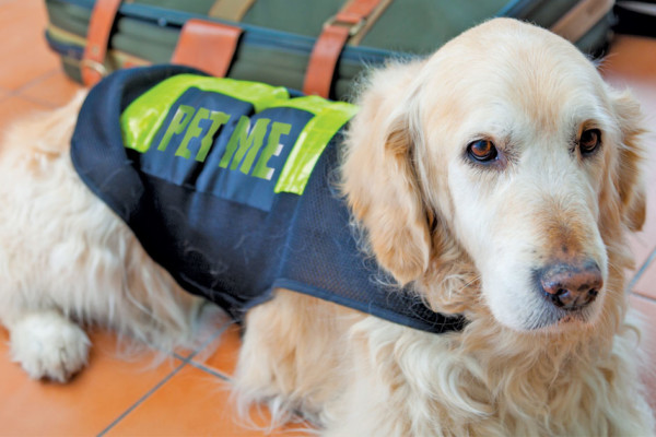 PET ME!  PET ME!  PET ME! Airport Therapy Dogs