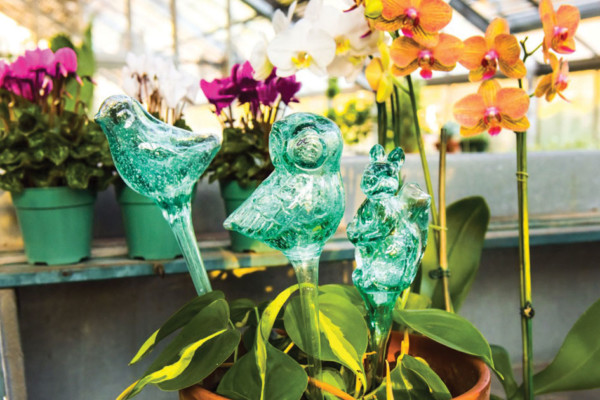 The Garden Boutique: At the 'Root' of Nurturing the Beauty of Winston-Salem