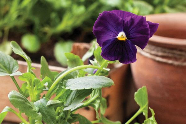 The Art of Transplanting Flowers and Plants