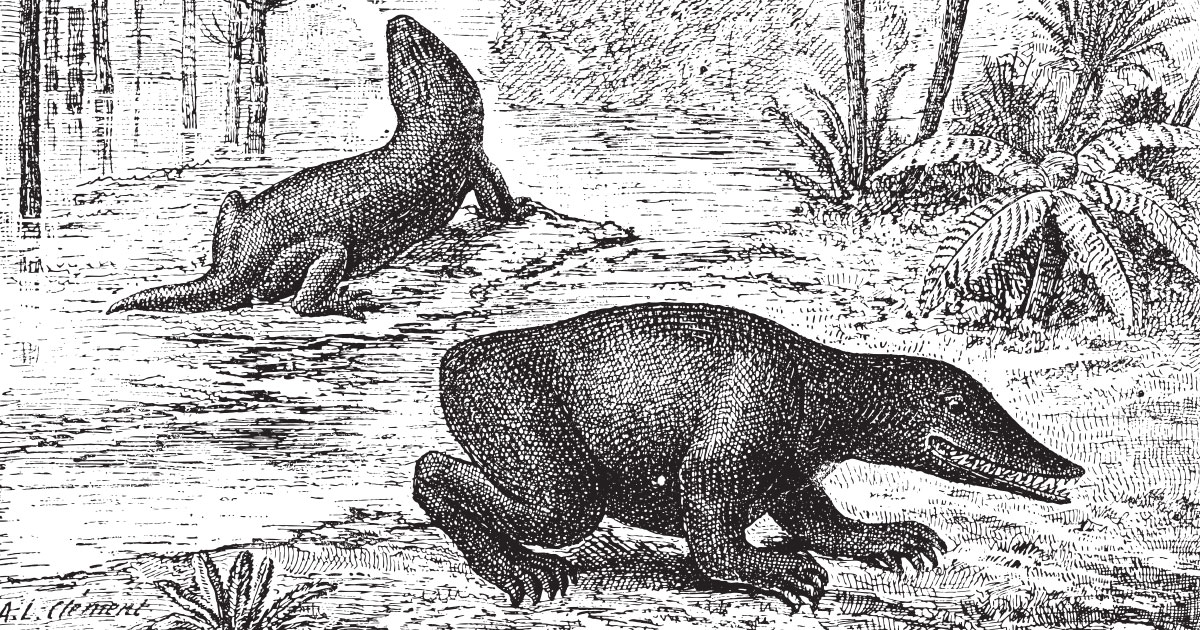 Dinosaurs In The Congo Thought To Be Long Gone Natives Say