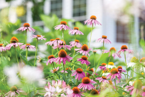 Steps in Beautifying Your Yard