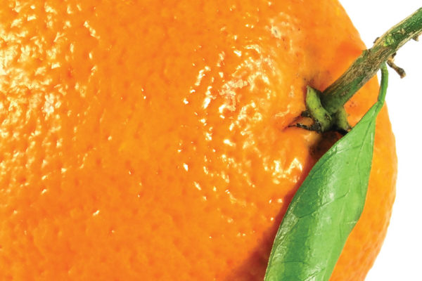 """Is that an orange in your purse?"" and Other Questions to Prepare for When Dieting"