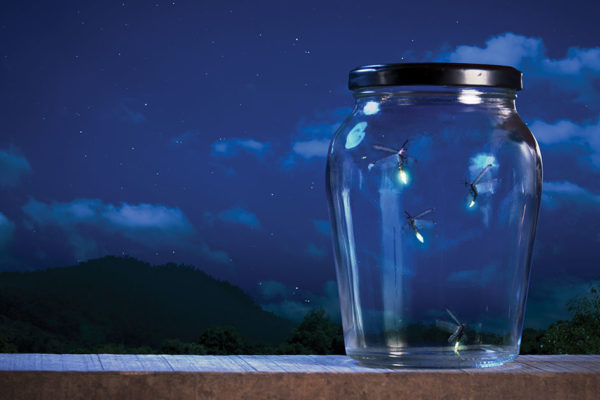 Fireflies Glow on a Magical Summer Night