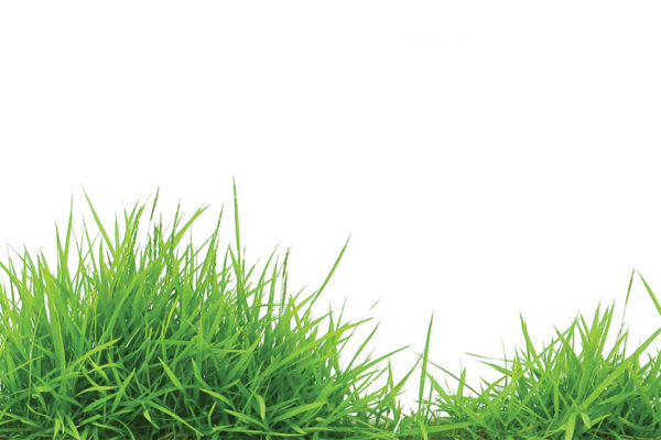 Tips to Beautify a Barren, Grassless Location